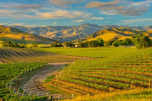 Central Coast Wine Tour