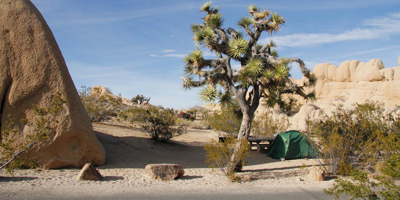 Camping in Joshua Tree | Visit California
