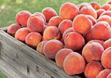 Always in Season: Peaches