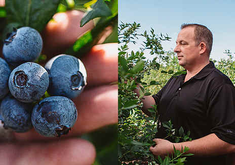 Beauty, Bounty and Blueberries. This is how California Grows.