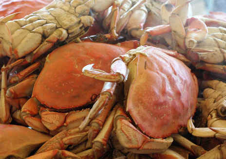 Mendocino Crab, Beer and Wine Festival