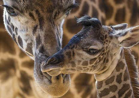 聚焦:圣地亚哥动物园