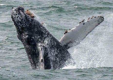 Mendocino Whale Festival