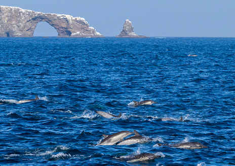 Guided adventures at Channel Islands