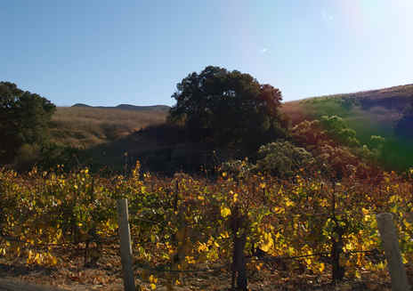 Santa Barbara: Santa Rita Hills Wine Trail