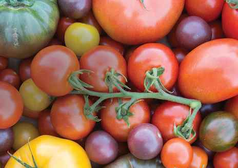 Always in Season: Tomatoes