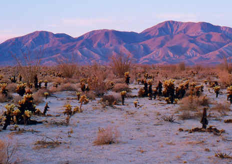 Spotlight: Anza-Borrego Desert State Park