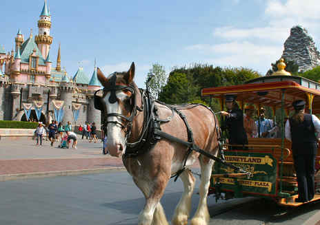 Getting Around the Disneyland Resort