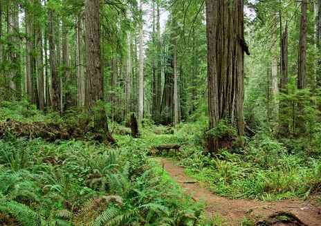 Destaque: Parques Estaduais e Nacional Redwood