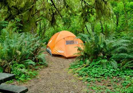 Camping in den Redwoods