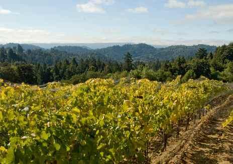Región del Vino de Silicon Valley