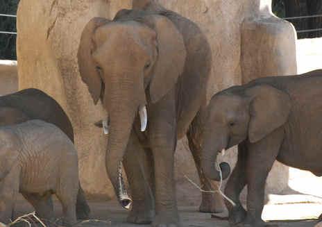 サンディエゴ動物園サファリパークのロアー&スノアー
