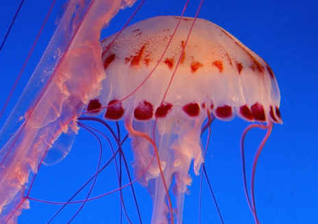 Monterey Bay Aquarium: Tours & Adventures