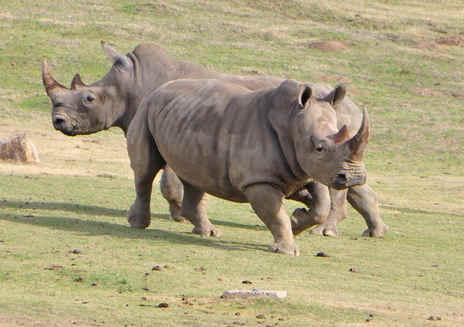 San Diego Zoo Safari Park: Roar 'n' Snore