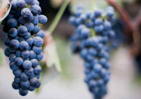 Sentiero del vino Madera