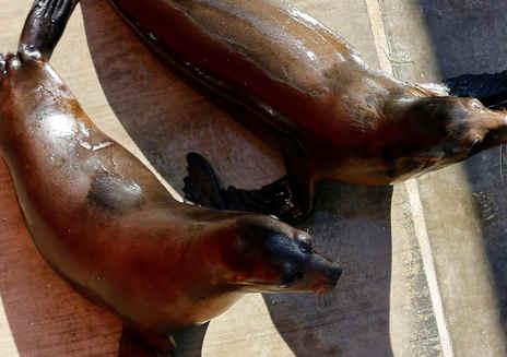 太平洋海洋哺乳动物中心