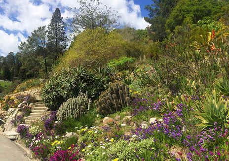 Must-See Gardens in California