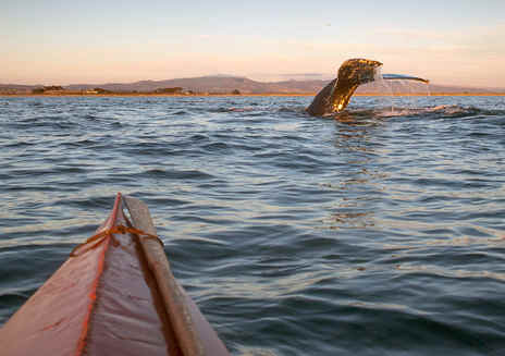 산타크루즈 고래 관찰