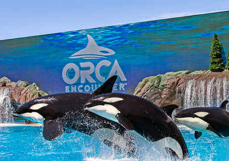 Spotlight: SeaWorld San Diego