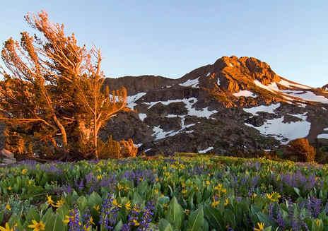 Carson Pass Trail
