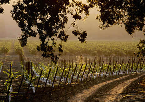 Sonoma County Wines and Wineries