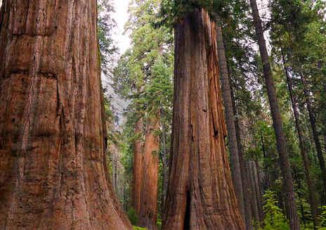 5 programas incríveis perto do Parque Estadual Calaveras Big Trees
