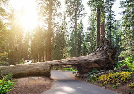 Unternehmungen in den Sequoia & Kings Canyon National Parks