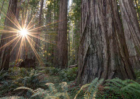 Insider's Guide to California's Redwood Coast