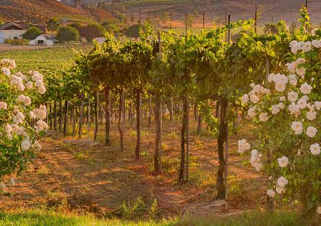 Visites guidées dans la région viticole de Temecula