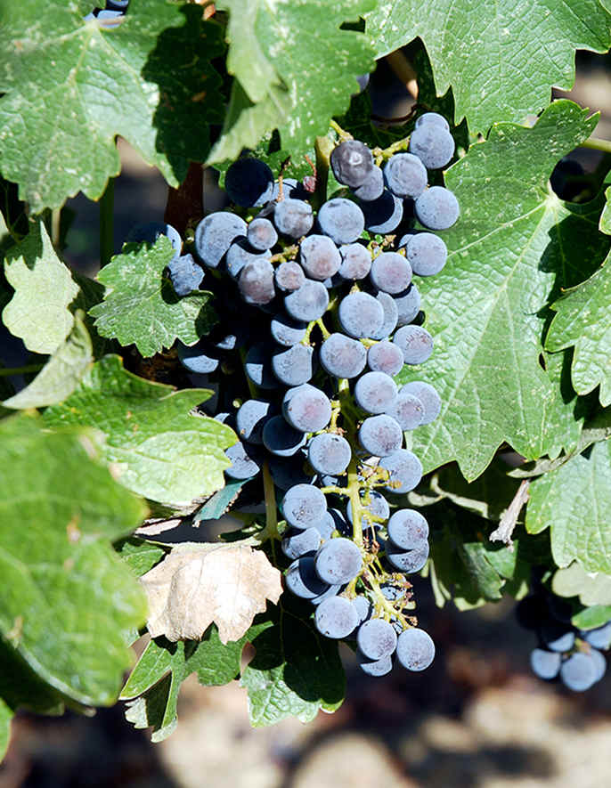 カリフォルニアの昔ながらのワインロード