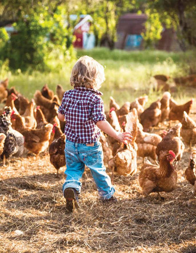 농촌 체험