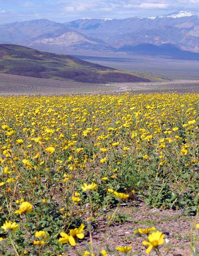 Best Ways to See the Death Valley Super Bloom