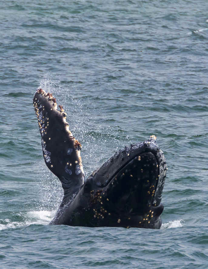 Top Places for Whale Watching in California