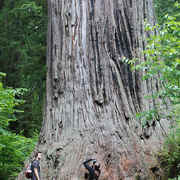 Humboldt County - Explore Redwood National Park