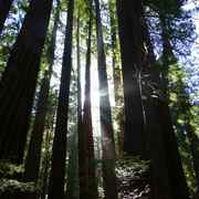 7 conseils pour visiter Muir Woods en été