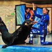 SeaWorld San Diego: Show 了解更多