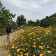Bluff Creek Historic Trails