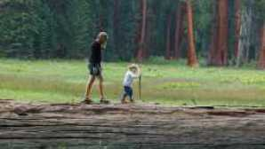 Focus : Sequoia e Kings Canyon National Parks 1281199090
