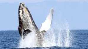 캘리포니아의 놀라운 해안 보존 구역 1efdb8a778a3952a2c28b851f61ec0f3