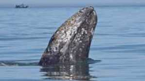 Top Places for Whale Watching in California 2Experiences_Programs_WhaleWatching