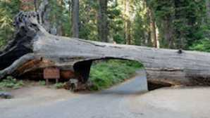 Spotlight: Sequoia & Kings Canyon National Parks 800px-Tunnel_log_W_PD_310