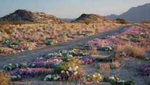 특별한 추억을 선사할 사막공원 6곳 9AF65E7B-1DD8-B71B-0B8BDB05171F2699