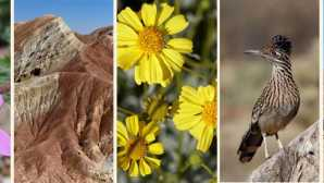 Spotlight: Anza-Borrego Desert State Park Borrego Springs Chamber and Visi_0