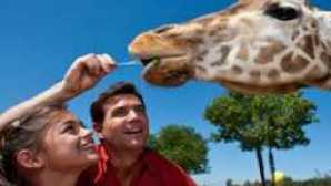 Special Experiences at the San Diego Zoo CARAVAN2