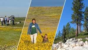 시에라의 만개한 야생화 CNPS - California Native Plant S