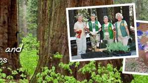 Calaveras Big Trees Association