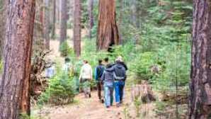 Evergreen Lodge Local Walk in the Woods - Kim Carroll Photography