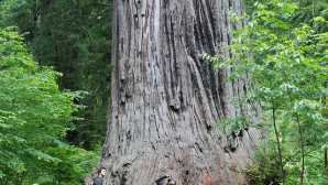 Explore Redwood National Park, T