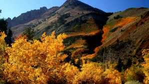 Bishop Fall Colors - Bishop Visitor Inf