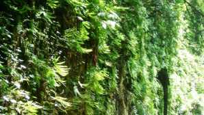 Trinidad Fern Canyon in Prairie Creek Red